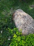 Stein in der weißen Blume des Gartens und purpurrotem in Blume laef grün lizenzfreie stockfotografie
