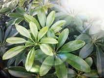 Stein in der weißen Blume des Gartens und purpurrotem in Blume laef grün stockfotos