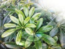 Stein in der weißen Blume des Gartens und purpurrotem in Blume laef grün lizenzfreies stockfoto