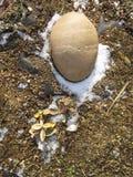 Stein in einem Rockery Stockfotografie