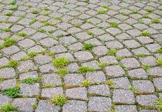 Stein gepflasterte Straße mit Gras Lizenzfreie Stockbilder