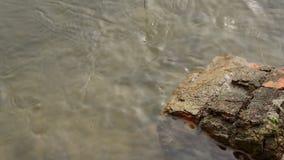 Stein im Fluss stock video footage