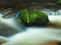 Stein im Gebirgsfluss mit nassen moosigen Teppich- und Grasblättern Neue Farben des Grases, tiefgrüne Farbe des nassen Mooses Lizenzfreie Stockbilder