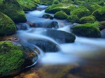 Stein im Gebirgsfluss mit nassen moosigen Teppich- und Grasblättern Neue Farben des Grases, tiefgrüne Farbe des nassen Mooses Stockfotos