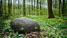 Stein im Gras Lizenzfreie Stockbilder