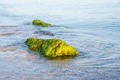 Stein im Meer Stockfoto