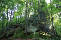 Stein im Wald Stockfotos