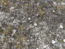 Stein mit Moos Lizenzfreies Stockbild