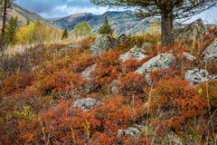 Stein mit Moos und Bergen Stockbilder