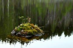 Stein mit Moos und Blättern innerhalb des Flusses stockfoto