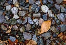 Stein- und Blatthintergrund Stockfoto