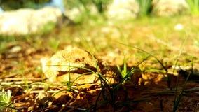 Stein und Gras lizenzfreie stockfotografie