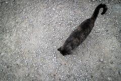 Stein und Katze lizenzfreie stockbilder