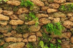 Stein und Moos auf Wand Stockbild