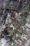 Stein und Wurzel stockfoto