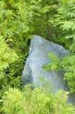 Stein unter Blättern Stockfoto