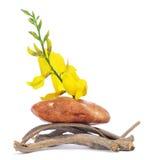 Stein, Zweige und Blumen stockfoto