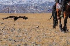 Steinadlerfestival im Winter schneebedeckte Mongolei Lizenzfreie Stockfotografie