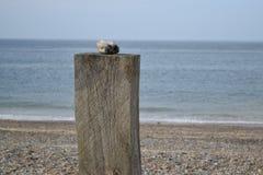 Steinbeitrag an der Küste Stockfotos