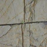 Steinbeschaffenheit mit Sprüngen und Blume Lizenzfreie Stockfotos