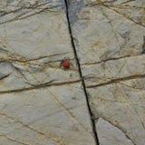 Steinbeschaffenheit mit Sprüngen und einem Marienkäfer Stockfoto