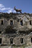 Steinbock - Fort Malamot - 1889 - 2.917m Stock Image