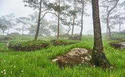 Steinboden am Kiefernwald, Feld der wilden Blumen und Morgen nebeln, Bolaven, LAO ein Stockbilder