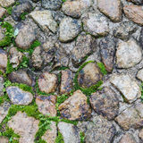 Steinboden mit Elchen Stockfotos