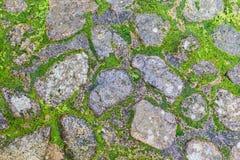 Steinboden mit Elchen Stockbild