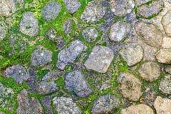 Steinboden mit Elchen Lizenzfreie Stockfotos