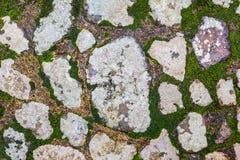 Steinboden mit Elchen Lizenzfreie Stockbilder
