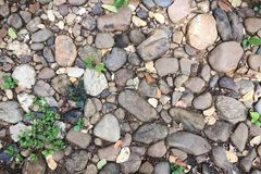 Steinboden mit kleinem Baum Stockbild