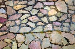 Steinboden mit Sprung und Kräutern Lizenzfreies Stockbild
