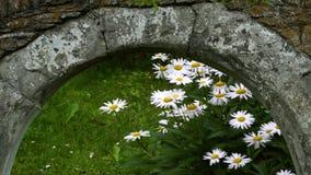 Steinbogen, Blumenaußenseite und ein Gewitter stock footage