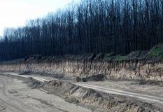 Steinbruchbäume Stockfoto