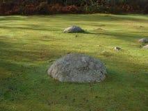 Steine auf dem Gras Lizenzfreies Stockfoto