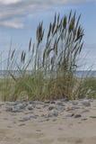Steine auf dem Strand, Hintergrund Stockbild