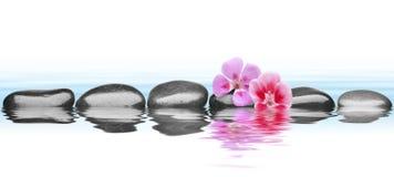 Steine auf Wasser mit Blume lizenzfreies stockfoto