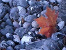 Steine, Blatt, filo Fotografie Stock