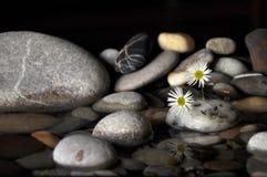 Steine, Blumen und Wasser Lizenzfreie Stockbilder