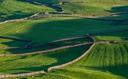 Steine in den Weg gelegte Felder in Yorkshire-Tälern Stockbilder