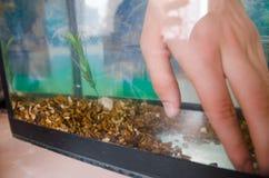 Steine für das Aquarium lizenzfreies stockfoto