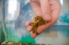 Steine für das Aquarium stockbild