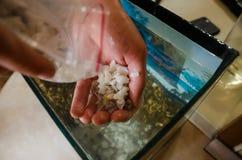Steine f?r das Aquarium lizenzfreie stockfotos