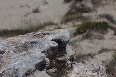 Steine in Formentera-Strand Stockbild