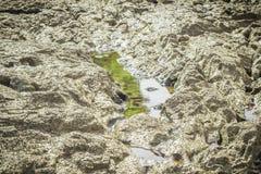 Steine im Fluss bei Suratthani Stockfotografie