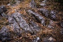Steine im Gras Lizenzfreie Stockbilder