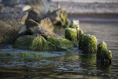Steine im Meer Stockfoto
