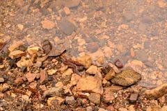 Steine im Wasser Stockfoto