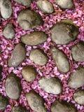 Steine mit den rosafarbenen Syringablumenblättern stockfotos